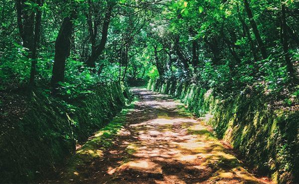 Madeira queimadas walk view