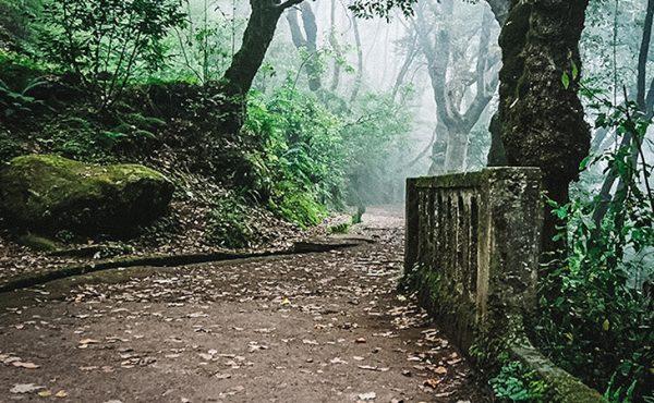 Madeira ribeiro frio walk view
