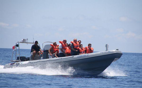 Madeira rota dos cetáceos boat ride