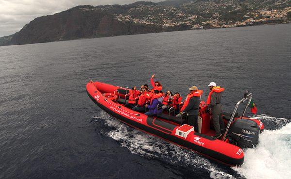 madeira ventura tiger boat ride